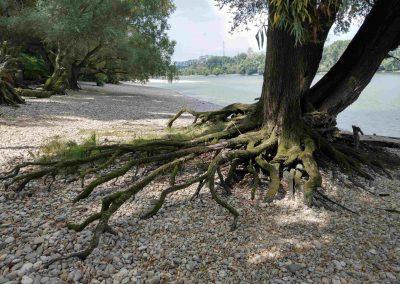 Lafranconi beach (3)