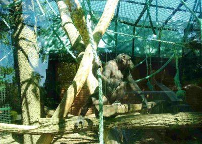 Zoo Hodonin 052018 (4)
