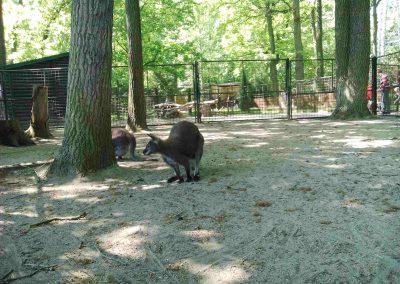Zoo Hodonin 052018 (8)