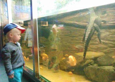 Zoo Hodonin 052018 (9)