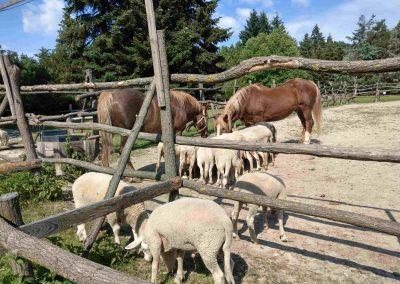Farma Príroda Stupava 072018 (6)
