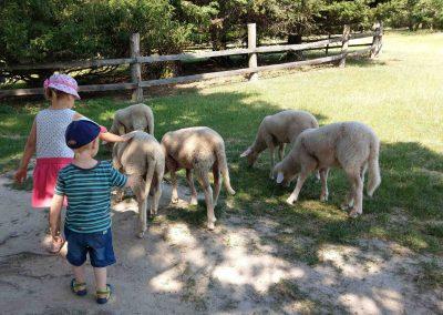 Farma Príroda Stupava 072018 (7)