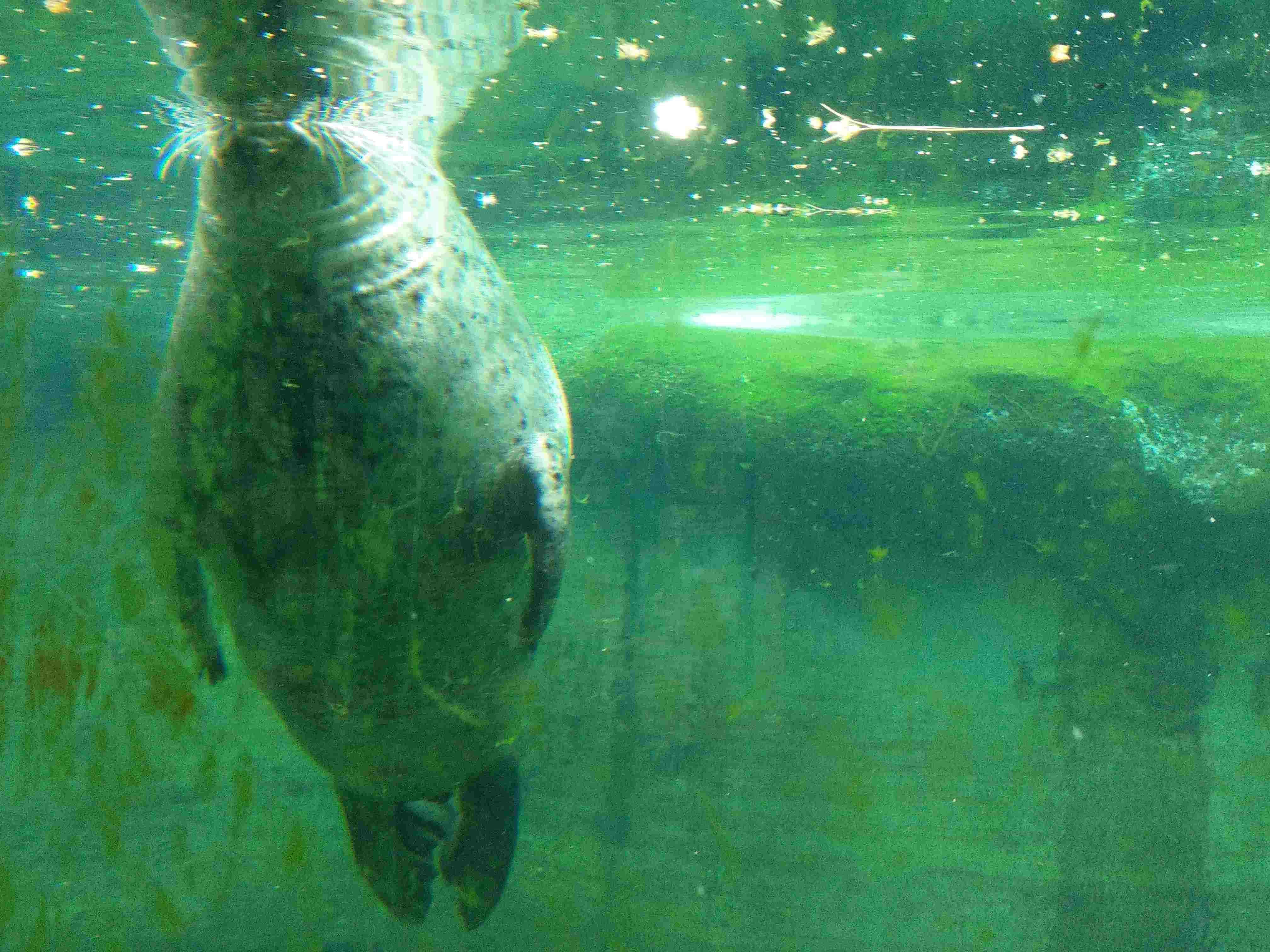 Zoo Budapest 042019 (12)