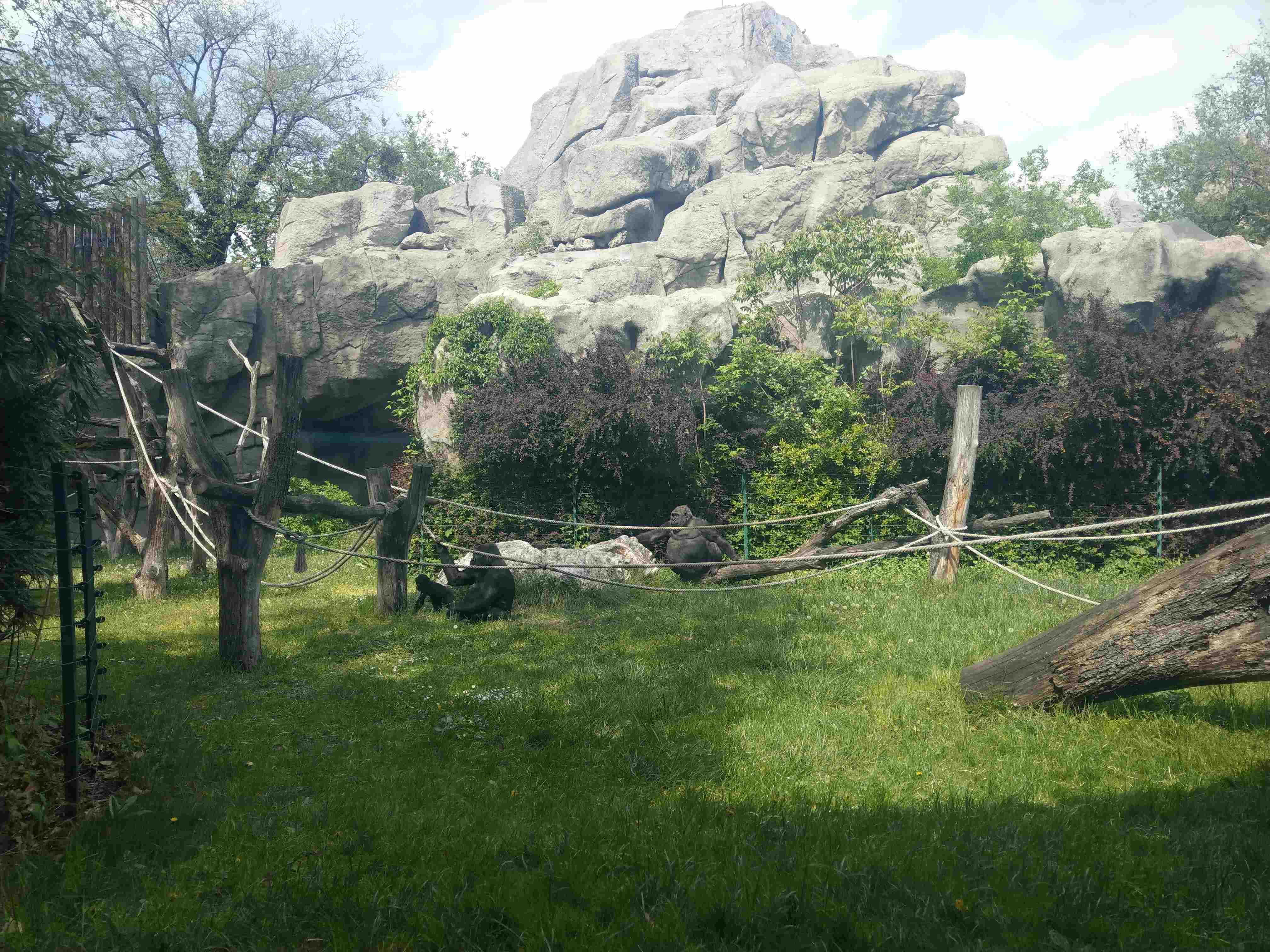 Zoo Budapest 042019 (13)