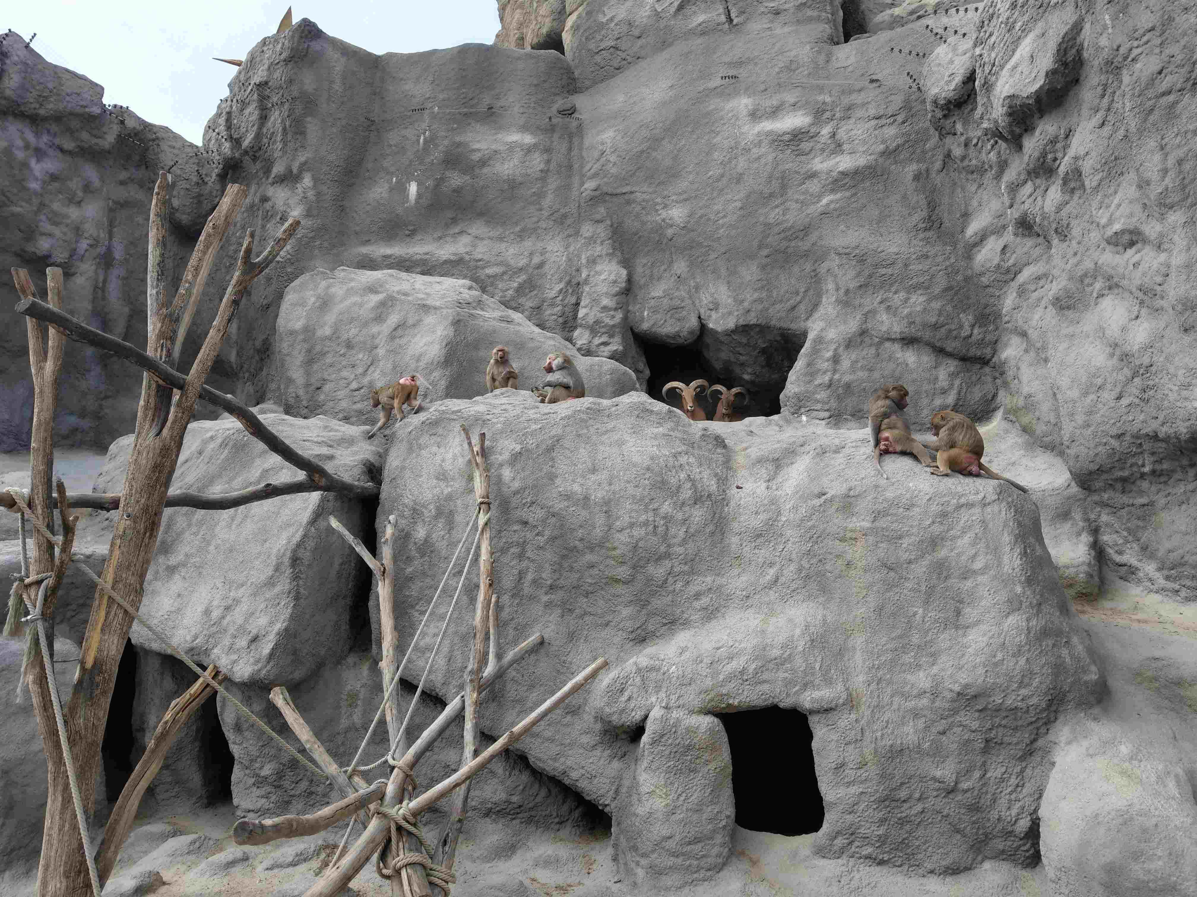 Zoo Budapest 042019 (17)