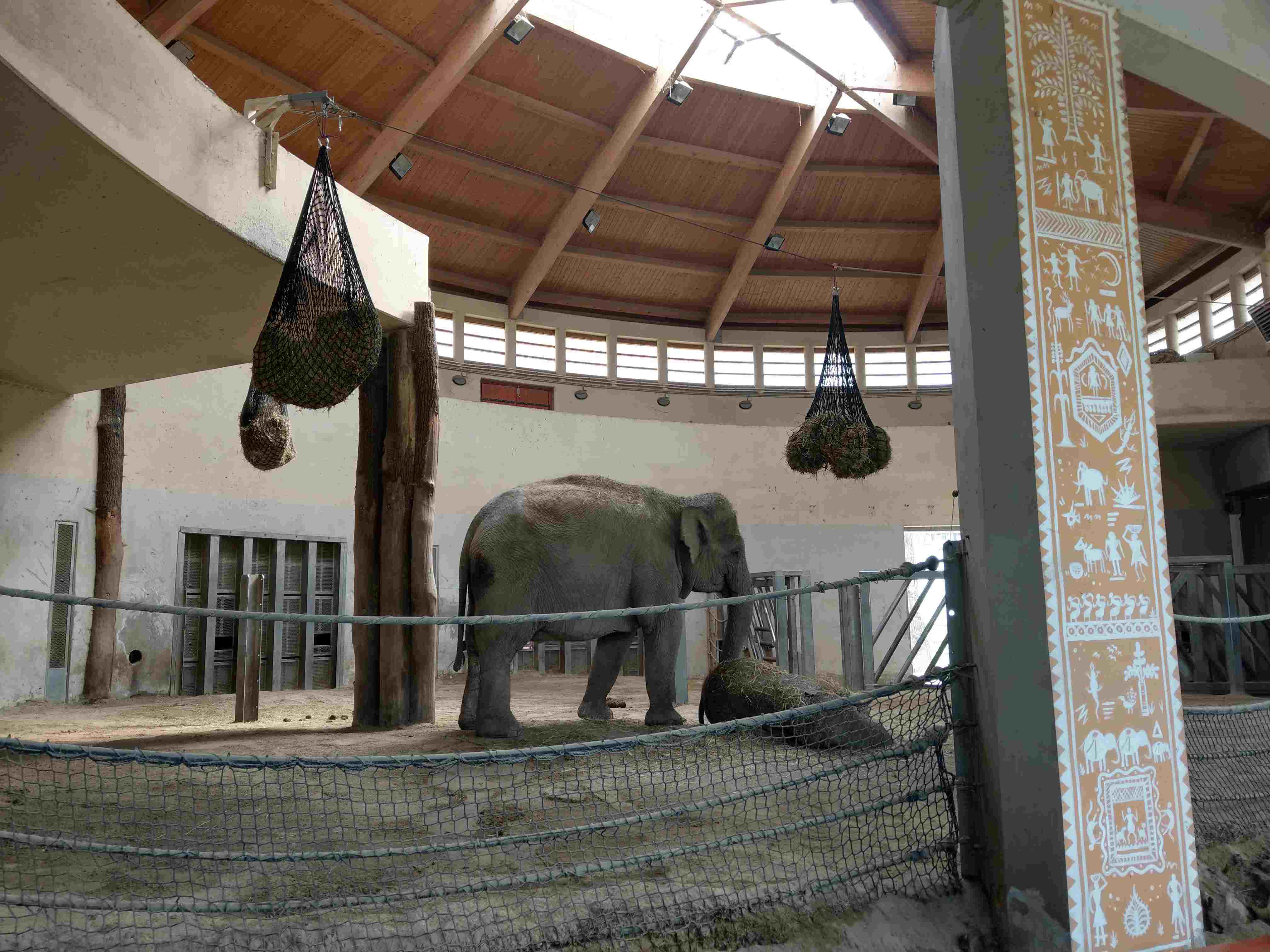 Zoo Budapest 042019 (18)