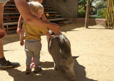 Zoo Gyor Maďarsko