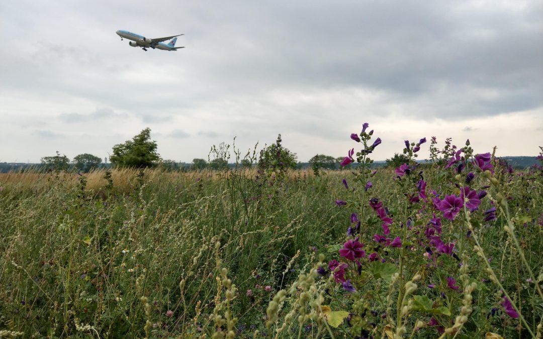 Planespotting letisko Viedeň