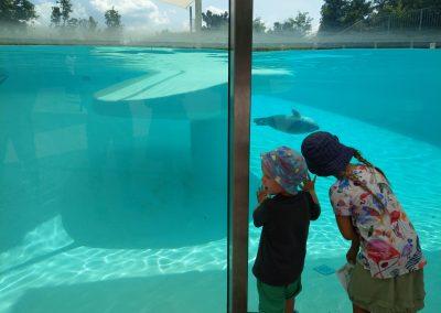 Veszprem zoo 072019 (12)