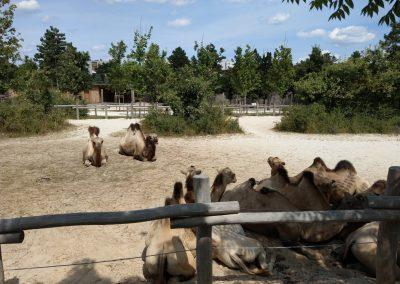 Veszprem zoo 072019 (13)