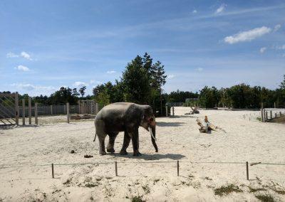 Veszprem zoo 072019 (14)