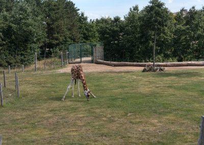 Veszprem zoo 072019 (15)