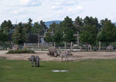 Veszprem zoo 072019 (16)