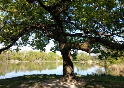 023 Trasa 2, Šúrsky rybník 042019