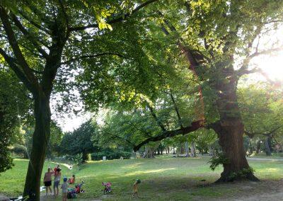 Park Stupava 062019 (6)