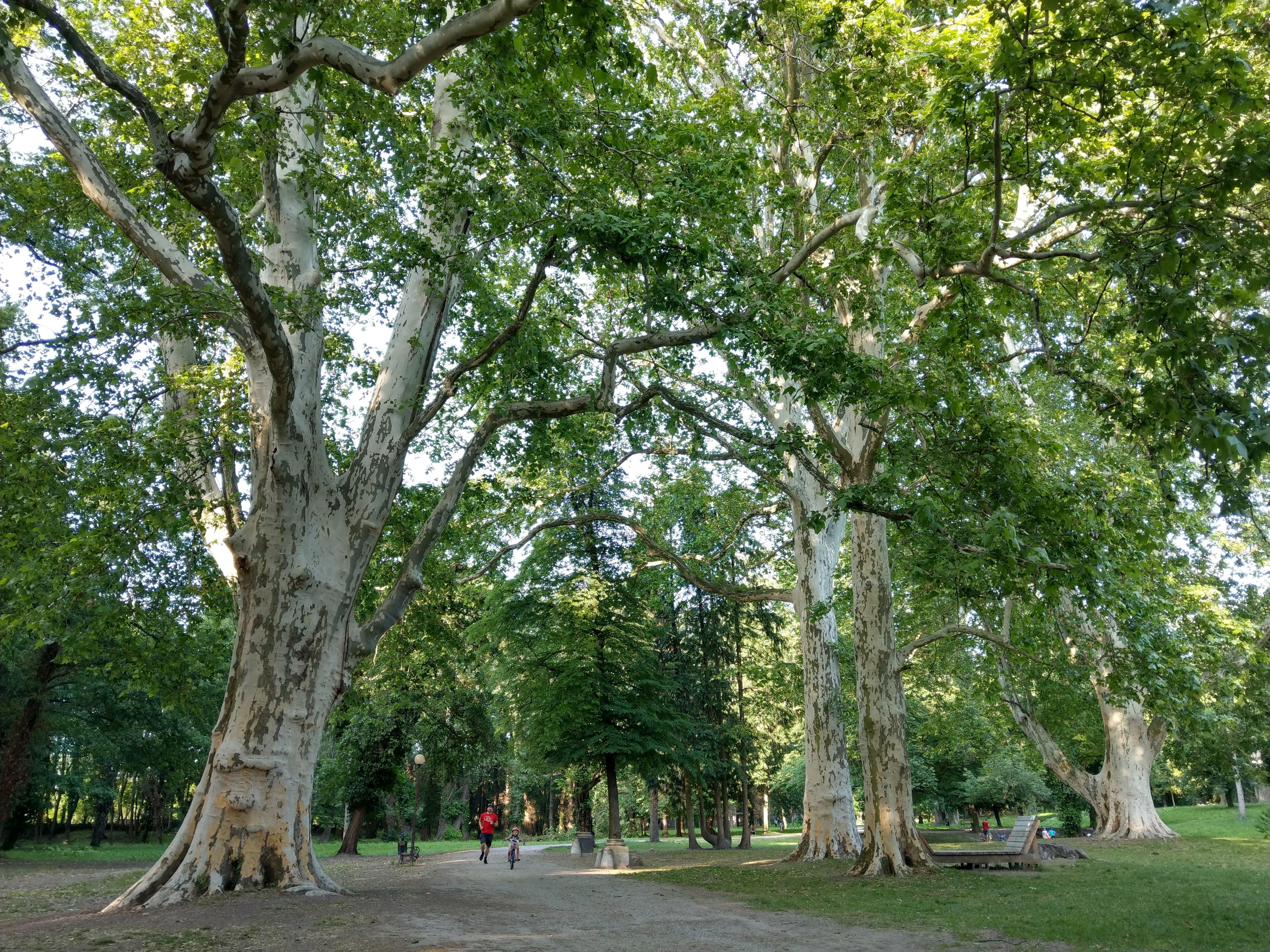 Park Stupava 062019 (5)