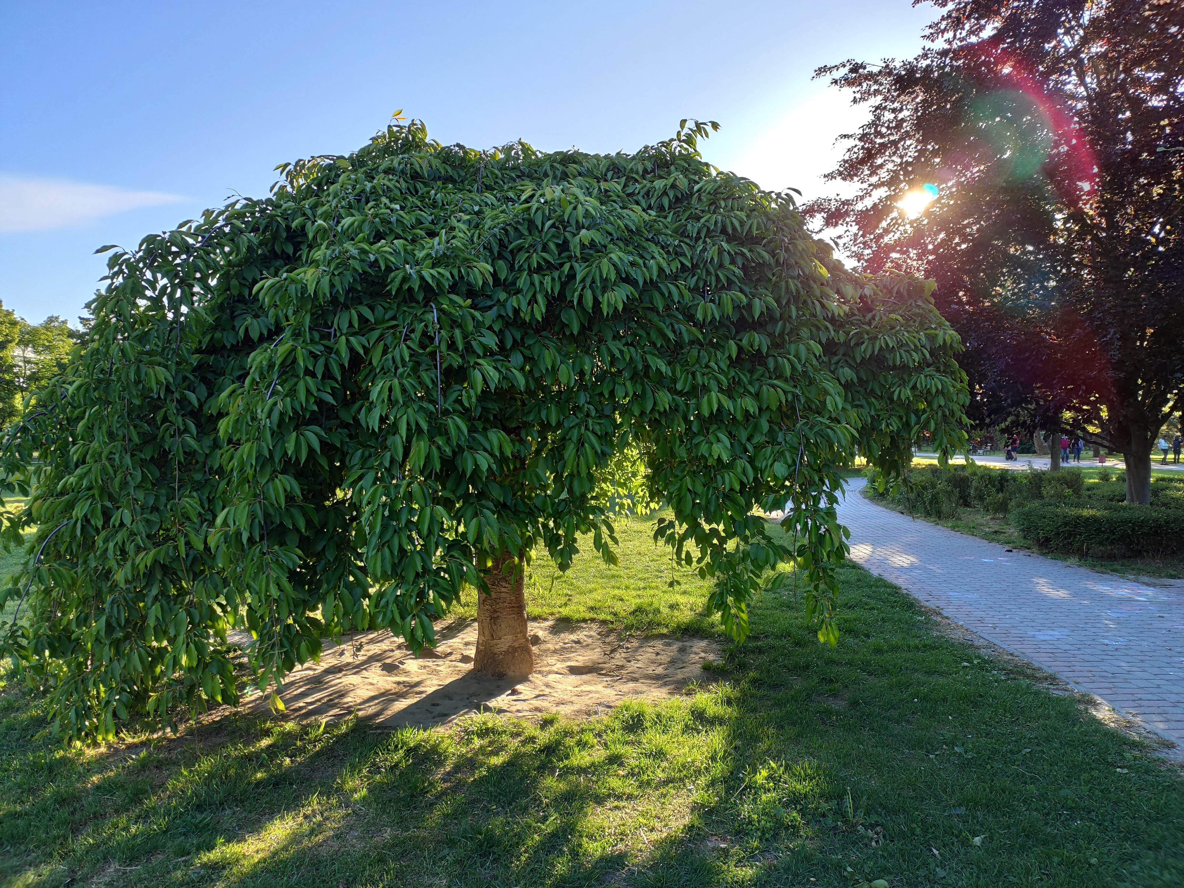 Park Ostredky (3)