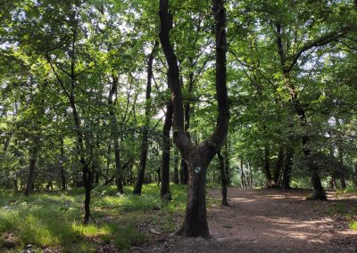 09 Park SNP Karlova Ves