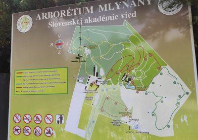 Arboretum Mlynany 052020 (1)