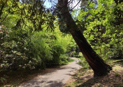 Arboretum Mlynany 052020 (10)