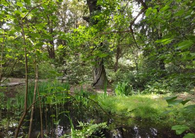 Arboretum Mlynany 052020 (11)