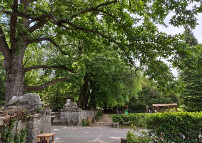 Arboretum Mlynany 052020 (12)