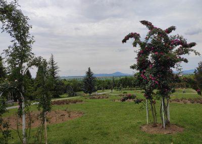 Arboretum Mlynany 052020 (15)