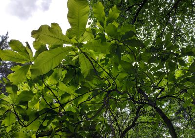 Arboretum Mlynany 052020 (18)