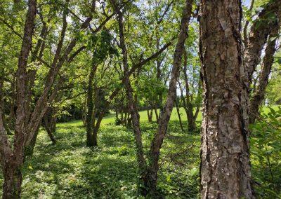 Arboretum Mlynany 052020 (2)
