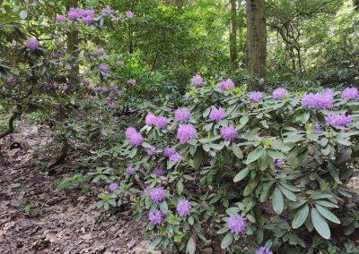 Arboretum Mlynany 052020 (7)