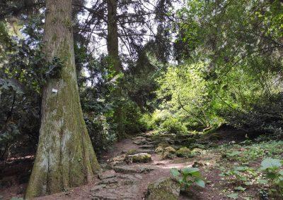 Arboretum Mlynany 052020 (8)