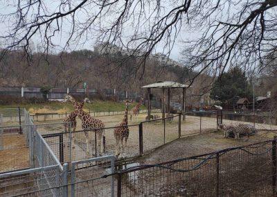 04 Zoo Bratislava 23012021
