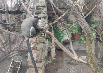 10 Zoo Bratislava 23012021