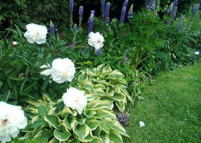Botanicka zahrada 0520217