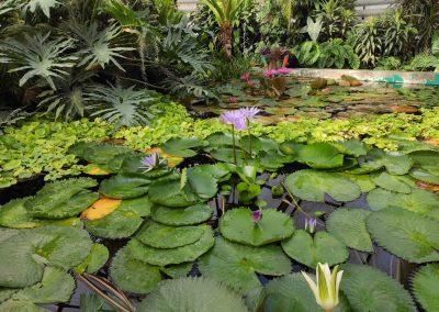 Botanicka zahrada 26092021 (8)