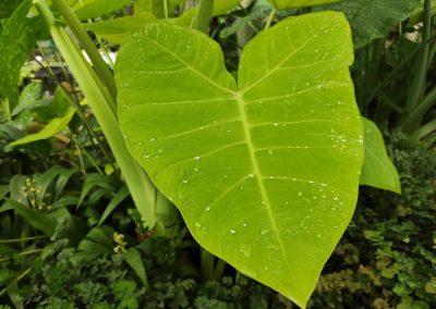 Botanicka zahrada 26092021 (9)
